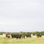 Lost Heifer Ranch | Katy, TX Photographer